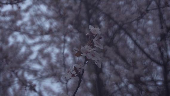 filmmaking_pic_v0010.png