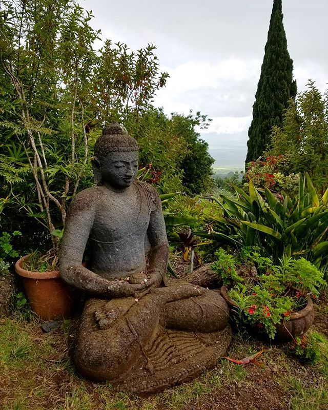 One of the many buddhas of the Lavender Farm. Ali'i Kula Lavender Farm. Nice change of pace, cooler