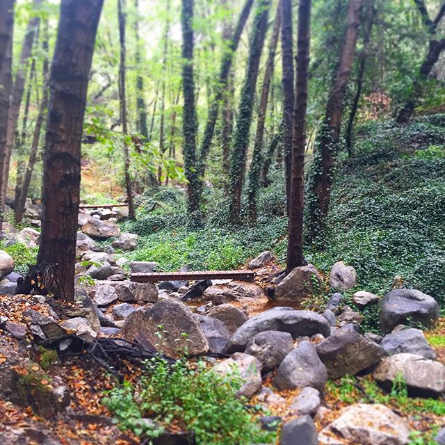 So peaceful! #hiking #beautiful #nature #summer #californialiving #adventure