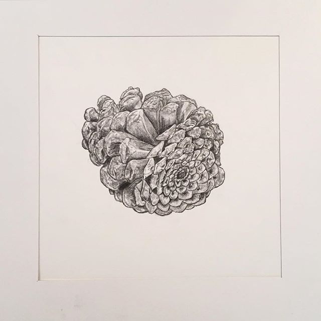 #pinecone #pencil #drawing #art