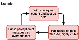 AfA Mac Group Macaque Issues-eg of wild