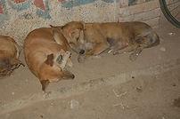 dog-meat-india.jpg