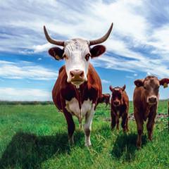 Farm Animals Asia Coalition