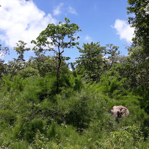 The problems facing Asia's captive elephants