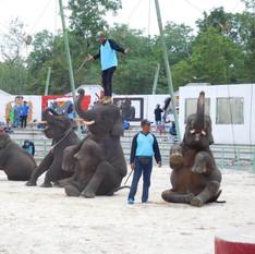 Elephants in performances