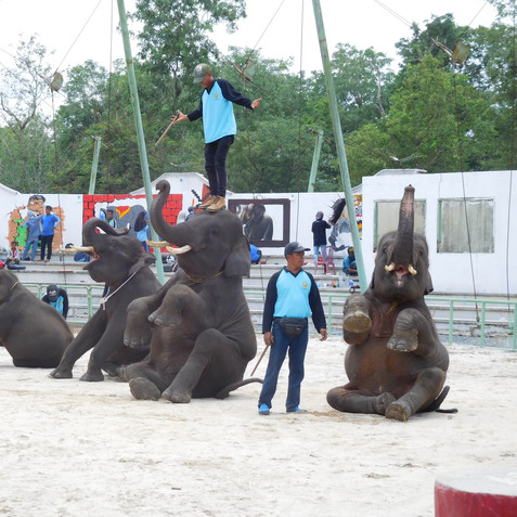 Elephants in performances