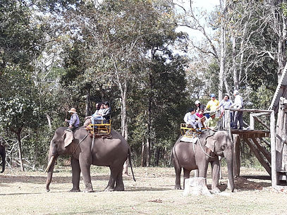YDNP ELE 20180110 tourism elephant ridin