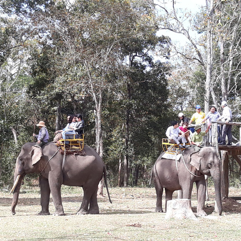 The issue of elephant riding
