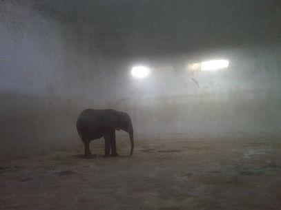 TAIYUAN ZOO african elephant calf 36.jpg