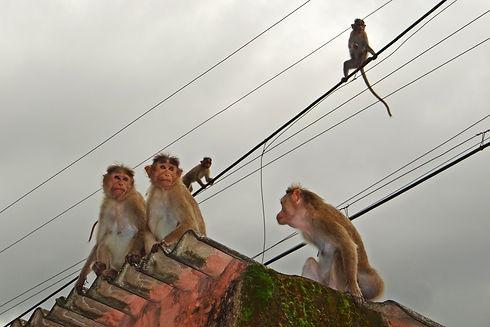 nature-animal-wildlife-wild-environment-