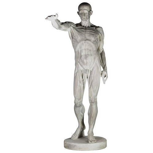 Ecorche in Stucco from the 1950s