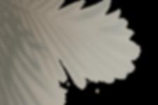 image-from-rawpixel-id-556148-original.p