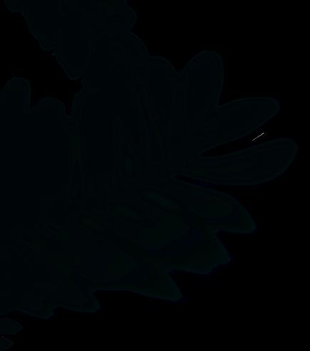 schadow_overlay.png