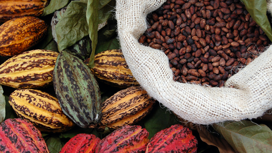 Indonesia Authentic Cocoa