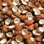 Coconut by products