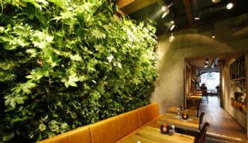 Зеленая стена.jpg