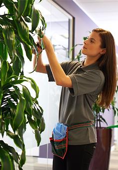 Обслуживание растений.png