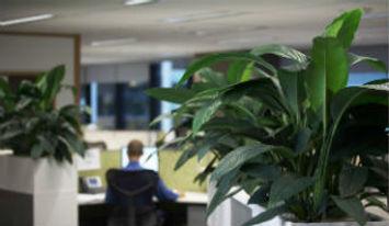 растения в офис.jpg