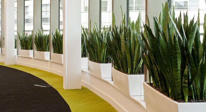 Внутренние озеленение офисов.jpg