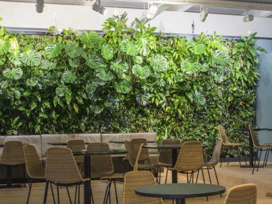 Вертикальное озеленение-1.jpg