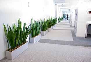 Офисные растения.jpg