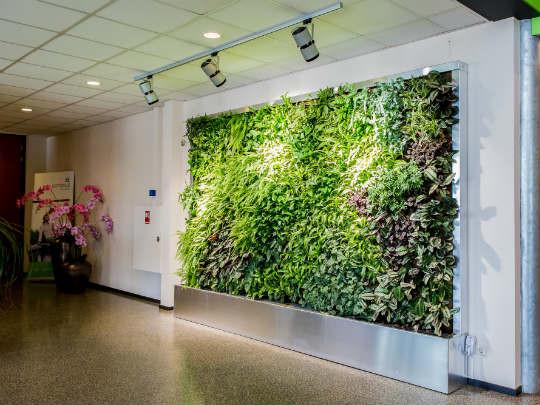Стены из растений-1.jpg