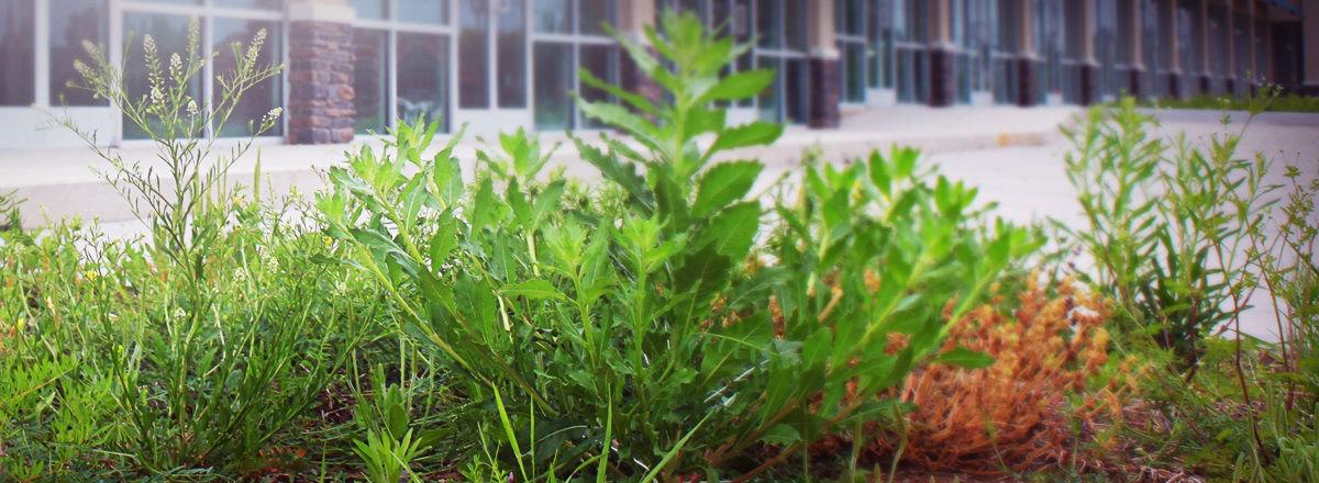 Уход за растениями москва.jpg