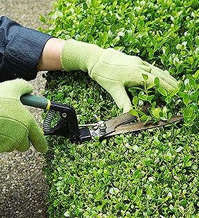 Обслуживание растений.jpg