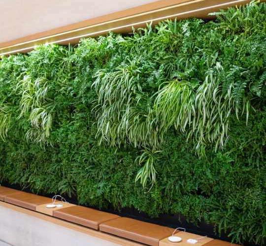 Стены из живых растений.jpg