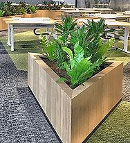 Растения для торгового центра.jpg