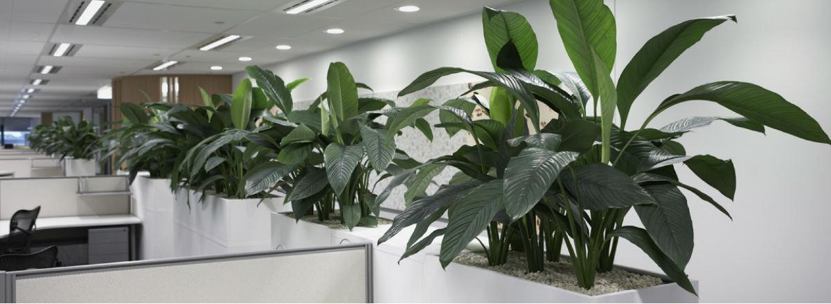 Интерьерные растения.jpg