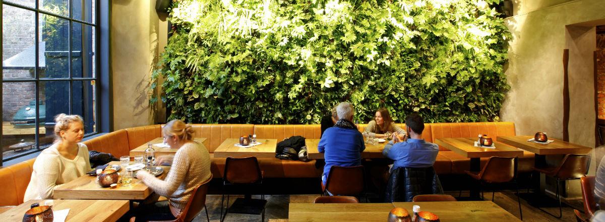 Вертикальное озеленение.jpg