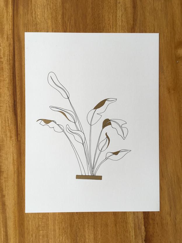 Ravenala madagascariensis/ Travellers Palm