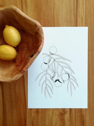Afrocarpus gracilior/ African Pine Fruit
