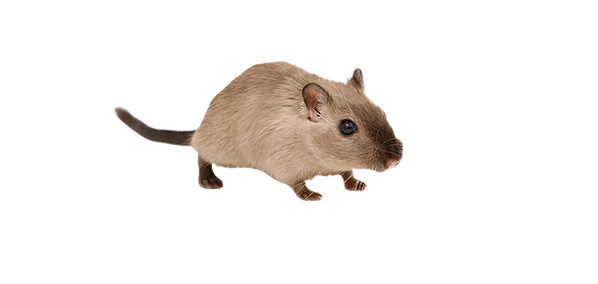 maus_edited_edited.png