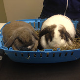 Co co and Ralph Rabbits.jpg