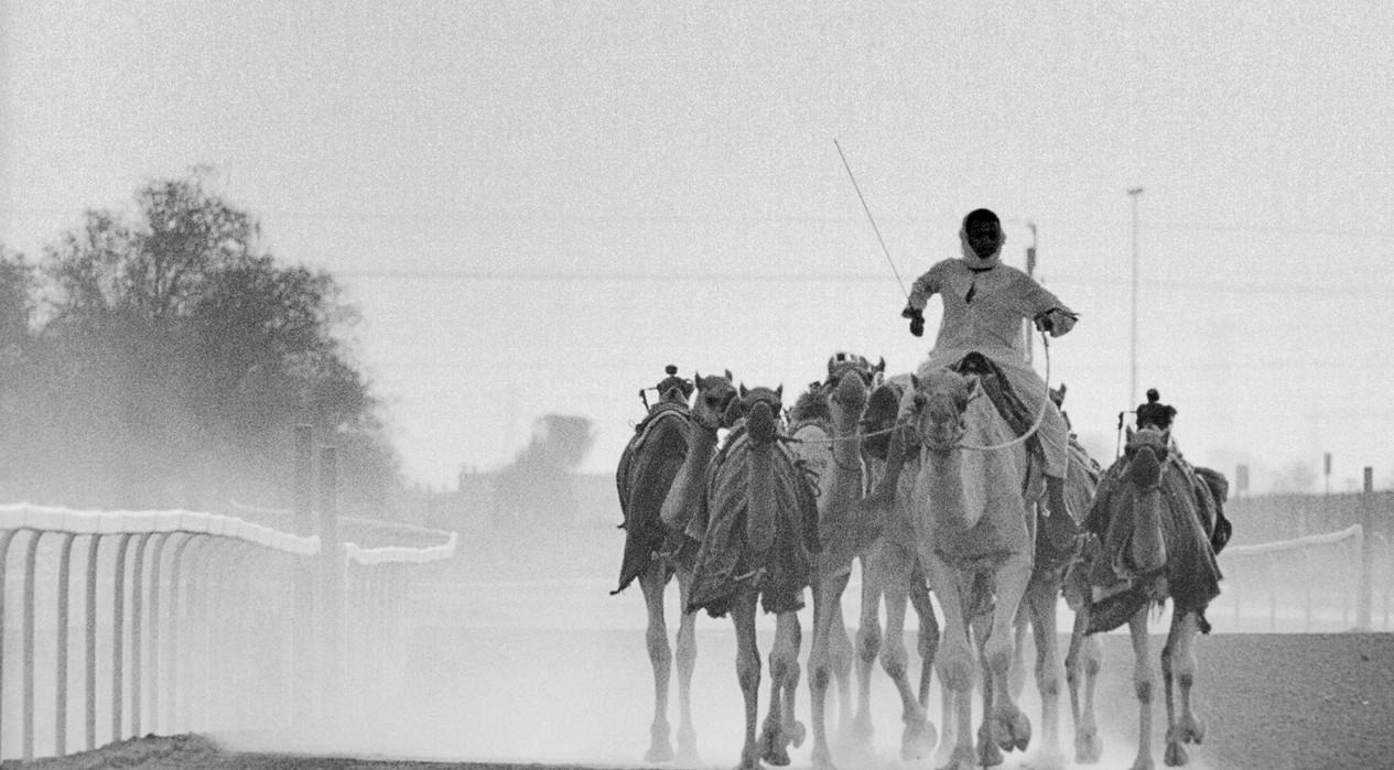Camel Training Dubai