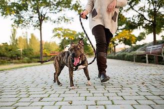 dog-walking-on-leash-e1504118070515.jpg