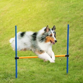 dog hurdle jump.jpg