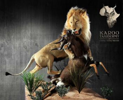Karoo Taxidermy South Africa