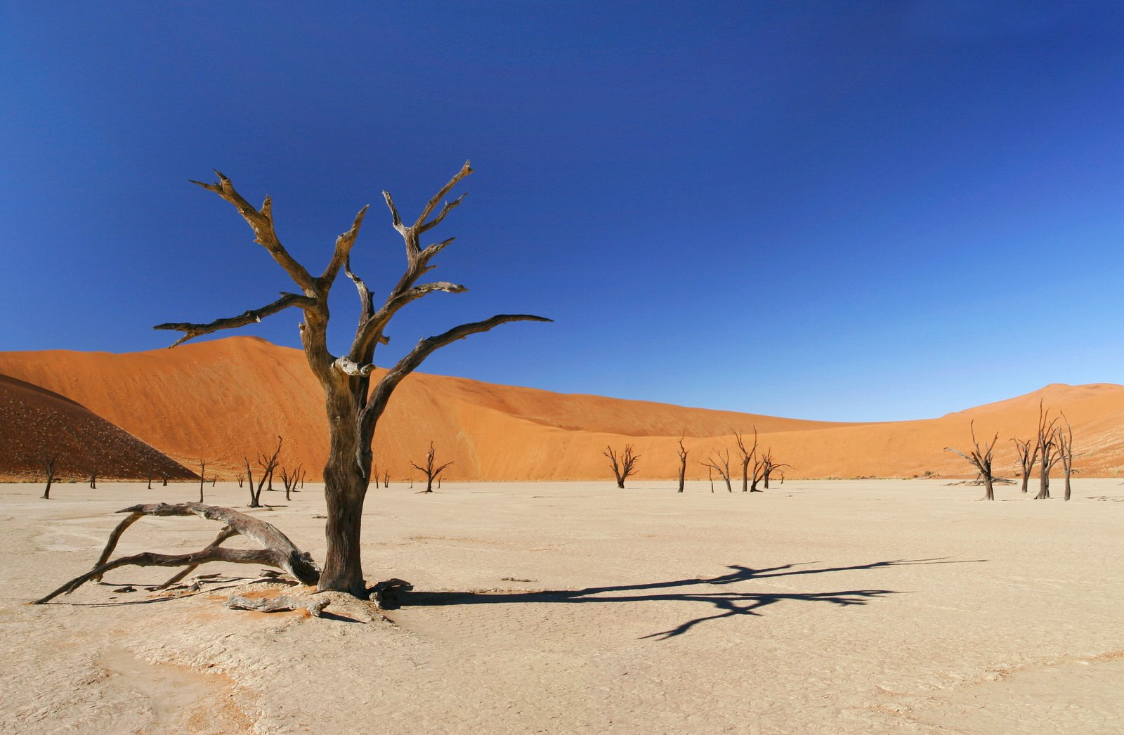 Explore the Namib