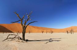 Explore the Namib