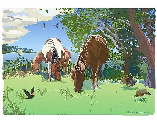 Chincoteague Ponies #1
