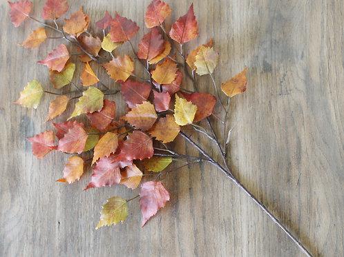 Fall Birch Stem
