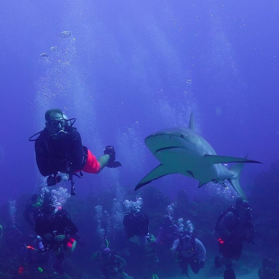 gulf coast divers shark diving