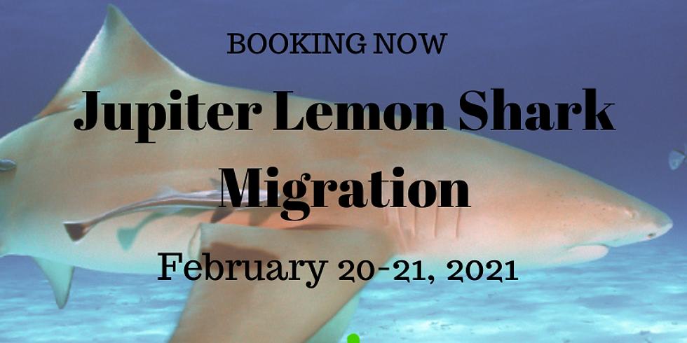 Jupiter Lemon Shark Migration February 20-21, 2021