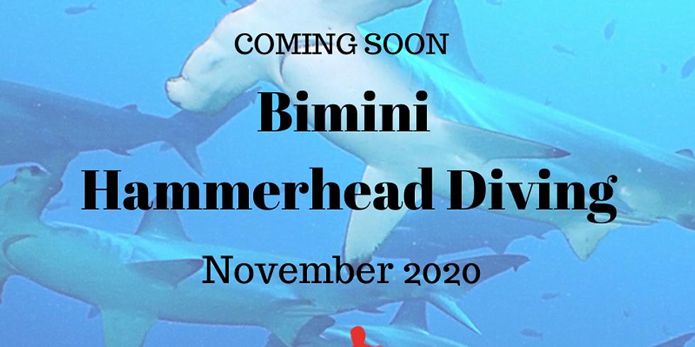Bimini Hammerhead Shark Diving