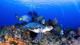 diving-in-cozumel.jpg