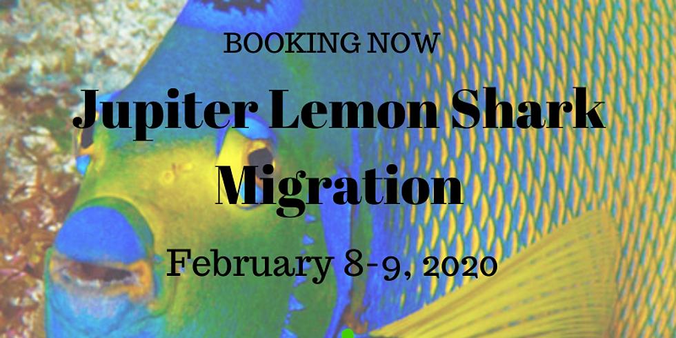 Jupiter Lemon Shark Migration February 15-16, 2020