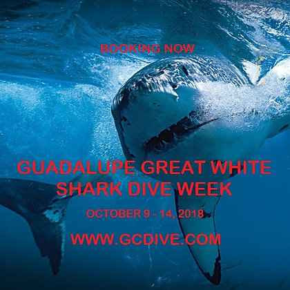 Guadalupe Great White Shark Dive Week - Oct 9 - 14, 2018